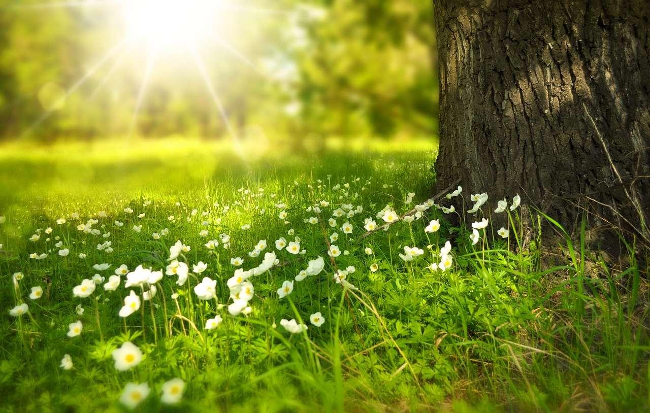 Shelly Joshua - Blog - Spring