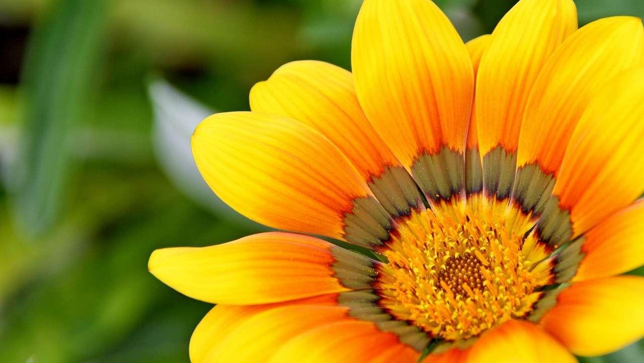 Shelly Joshua - Blog - Yellow Flower